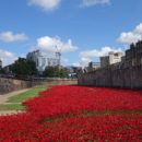 WW1 Memorial Installation at the Tower of London